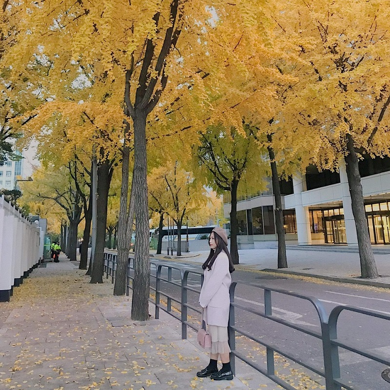 Check in trên những con đường ngập tràn lá vàng