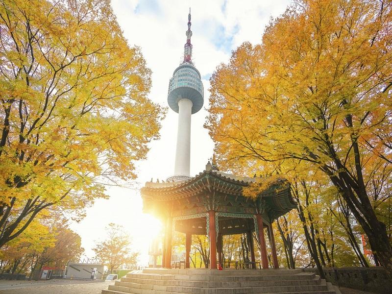 Ngọn tháp namsan bên những hàng cây lá vàng rực rỡ