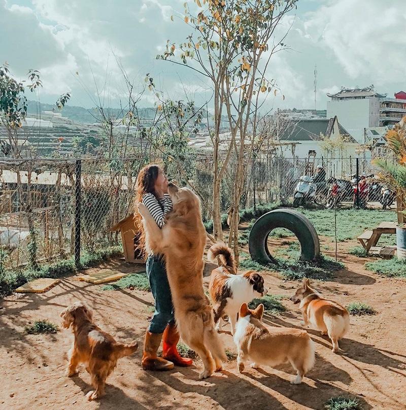 Quán cafe Black Rock Garden có những chú chó thân thiện, đáng yêu