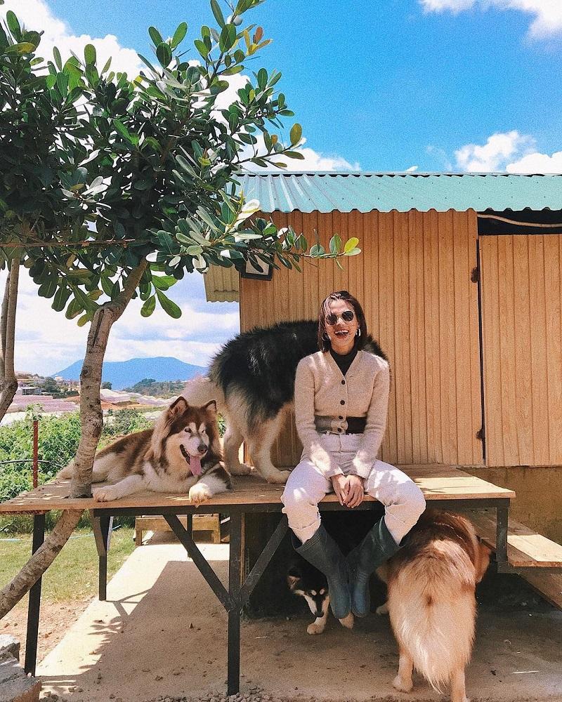 Thoải mái chụp hình cùng những chú chó ở Black Rock Garden