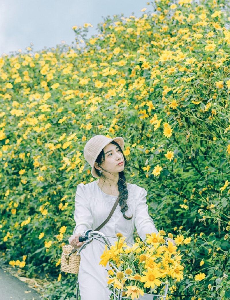 Vườn hoa dã quỳ ở Đà Lạt