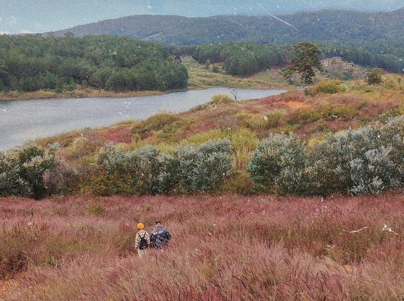 Đà Lạt vào tháng 12 ngập tràn đồi cỏ hồng