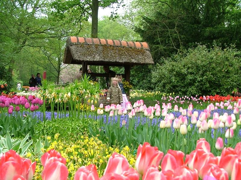 Khu vườn Tulip ngập tràn sắc màu ở vườn hoa Minh Tâm Đà Lạt