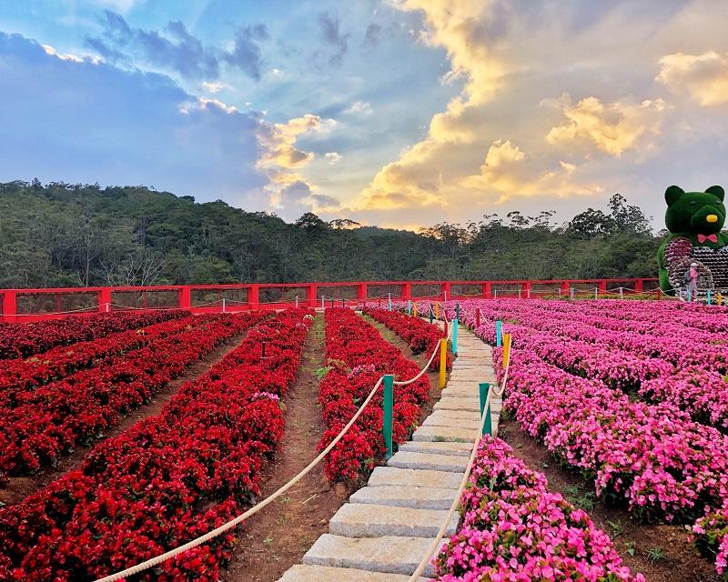 Toàn cảnh những cánh đồng hoa được trồng sát nhau