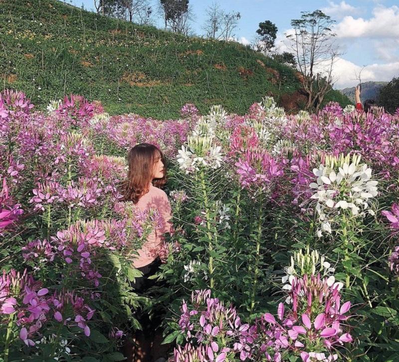 Chụp hình giữa những bông hoa xinh đẹp cao bằng người