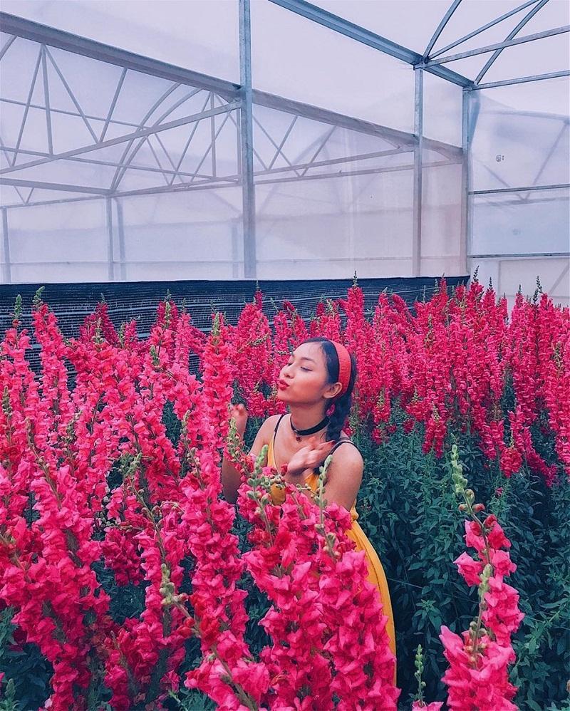 Các bạn trẻ chụp ảnh bên trong khu vườn hoa của làng hoa Vạn Hạnh