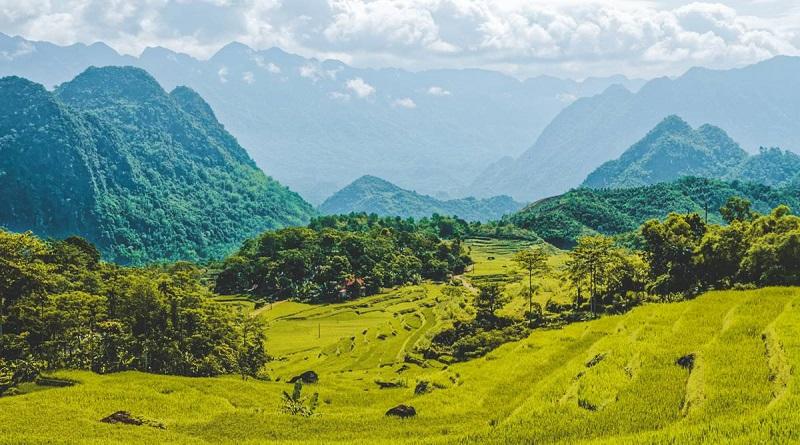 Những cánh đồng ruộng chín vàng ở Mai Châu