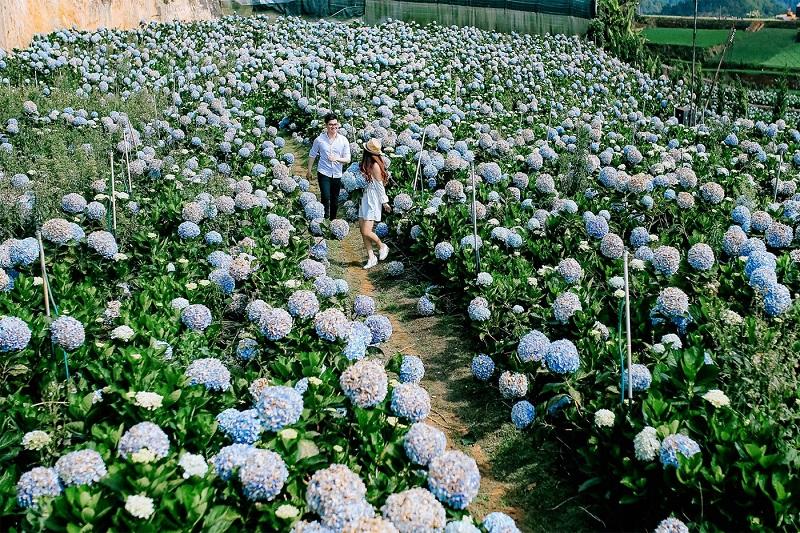 Một cặp đôi chụp hình trong không gian lãng mạn của vườn hoa Trại Mát
