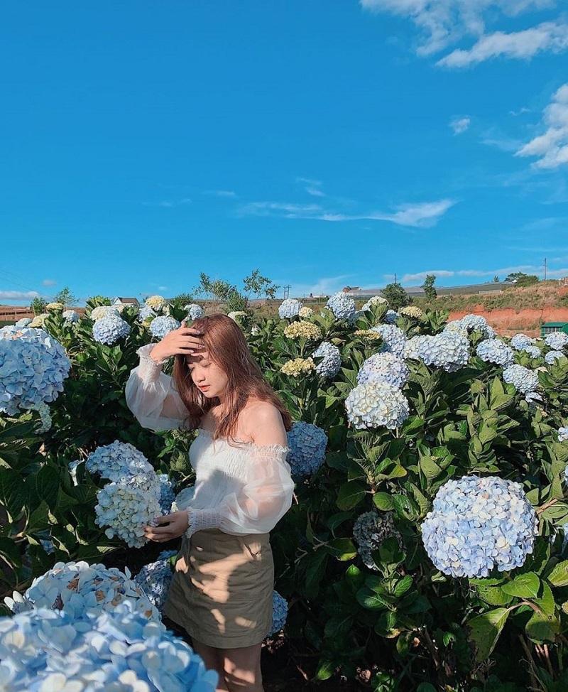 Chụp hình ở vườn hoa cẩm tú cầu vô cùng đẹp