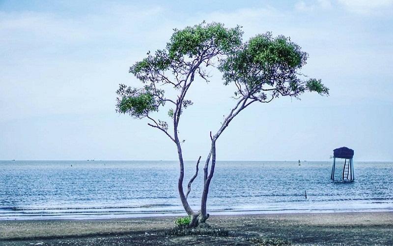 """Một góc nhìn ra biển với """"cây cô đơn"""" như Hàn Quốc"""