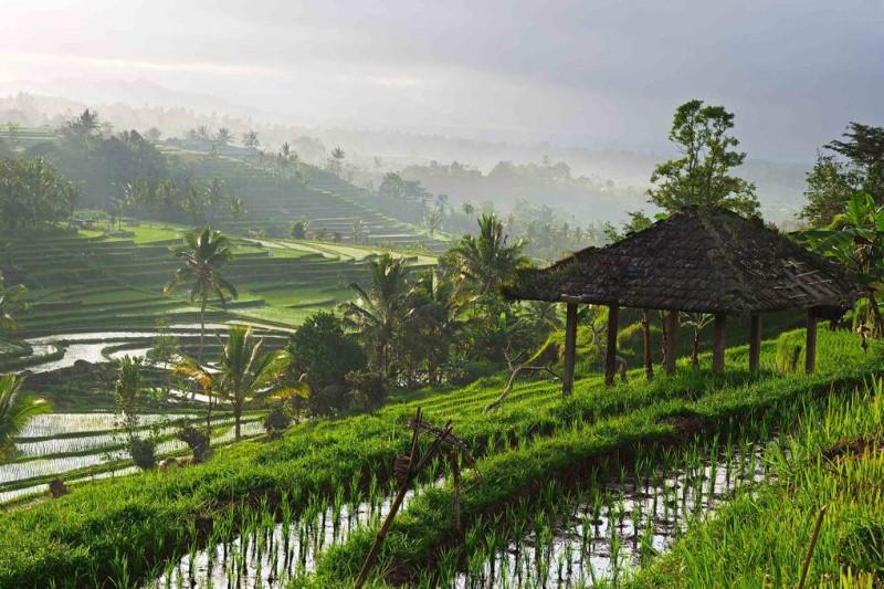Những thửa ruộng bậc thang trong xanh tại Bali
