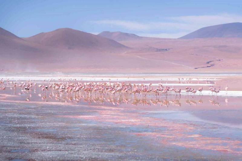 Đàn ngỗng di chuyển trên chảo muối gần dãy núi Andes