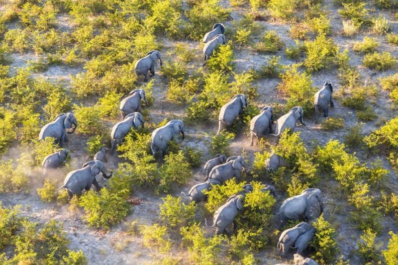 Đàn voi tại ốc đảo Botswana