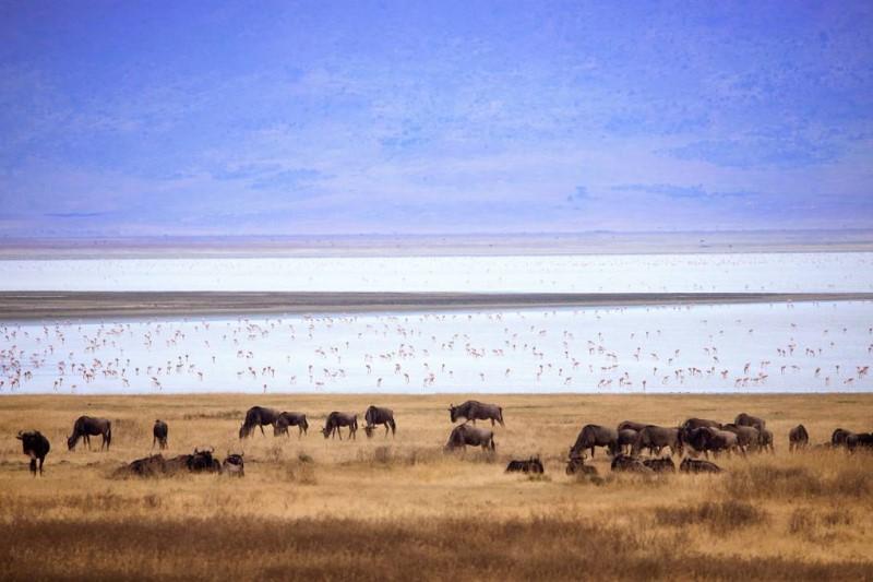 Thảm thực vật và động vật đa dạng tại vùng đất Tanzania