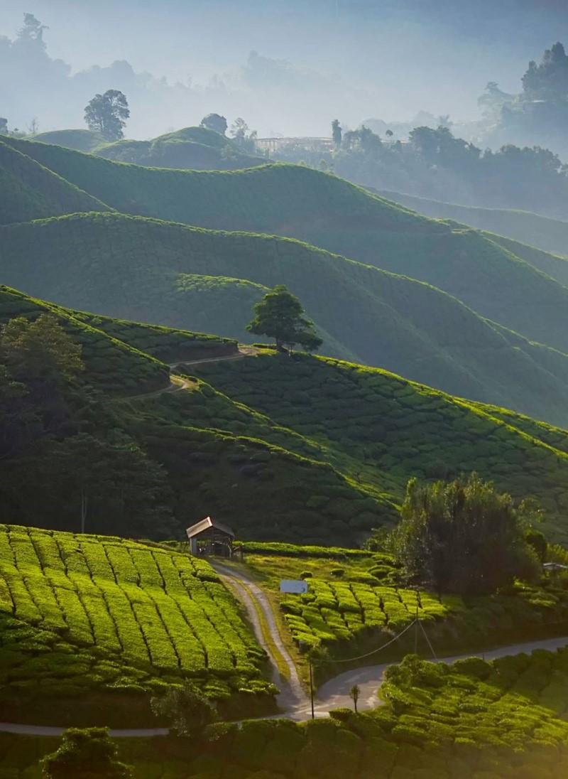 Darjeeling là một thị trấn nhỏ nằm trên những ngọn đồi thoai thoải dãy Himalaya