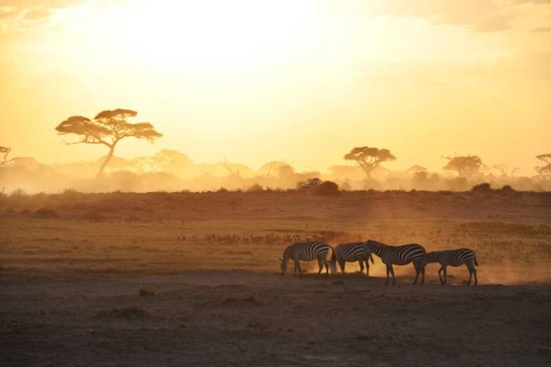 Đàn ngựa vằn ở Kenya Châu Phi