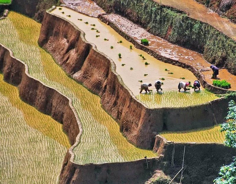 Ruộng bậc thang mùa nước đổ tại Mù Căng Chải