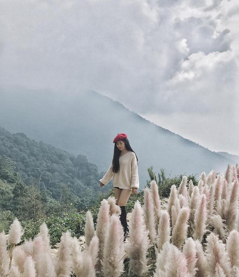 Cánh đồng cỏ lau Tam Đảo mù sương