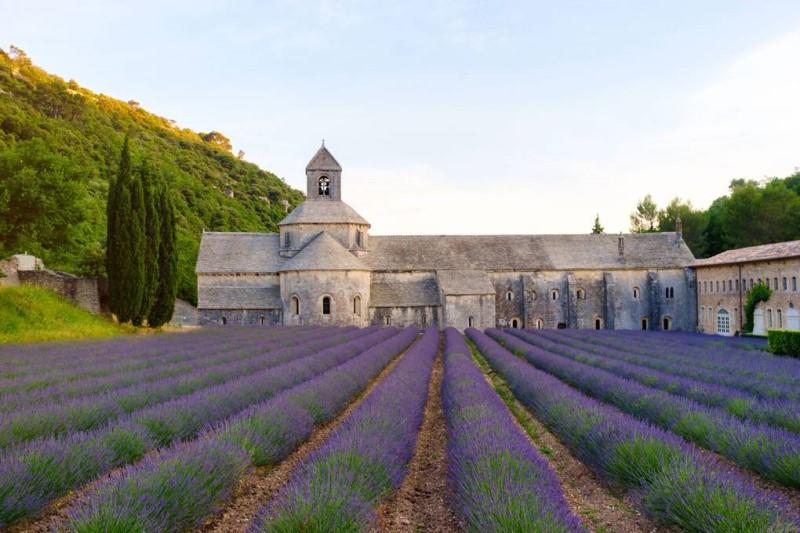 Cánh đồng hoa oải hương phủ tràn sắc tím tại Provence