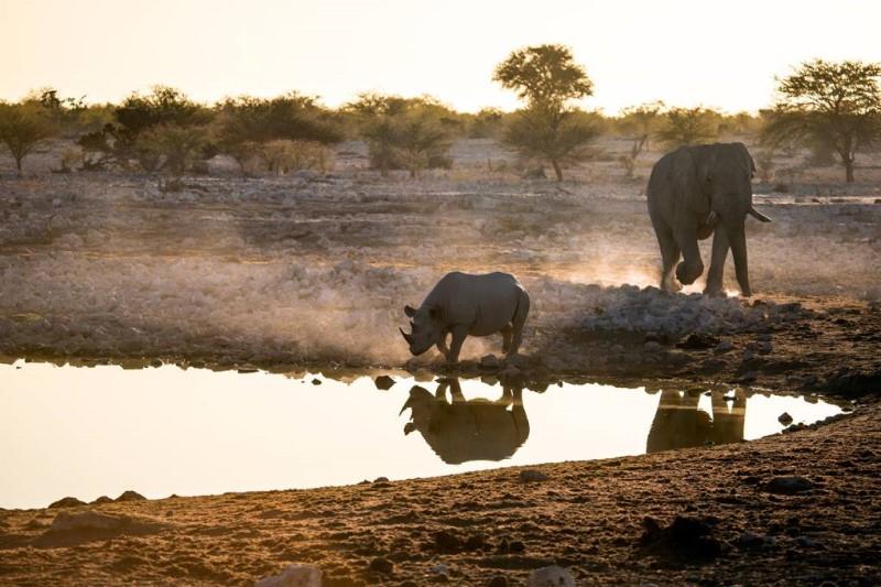 Những chú tê giác tại thiên đường động vật hoang dã ở Botswana