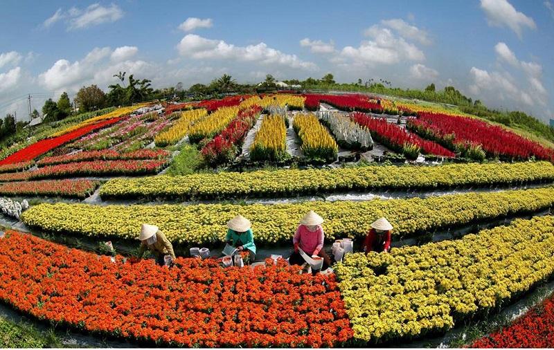 Làng hoa Sa đéc Đồng Tháp với nhiều loài hoa màu sắc