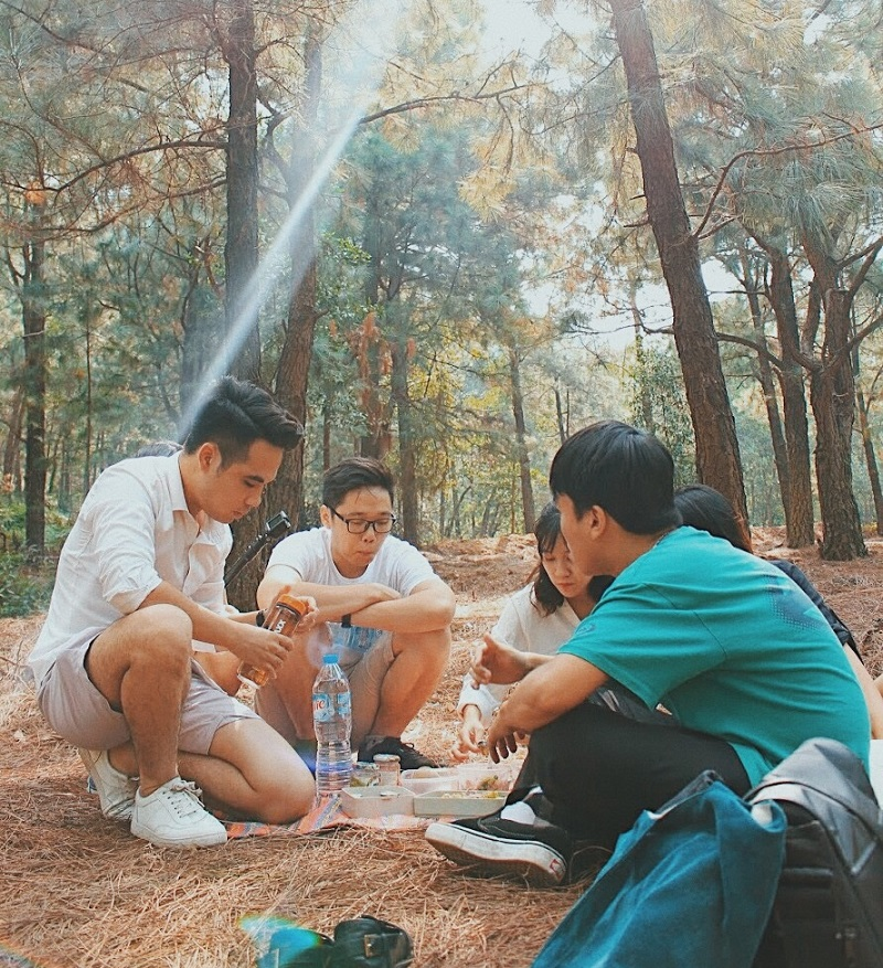 Tổ chức ăn uống và truyện trò cùng nhau trong khu rừng thông xanh mát