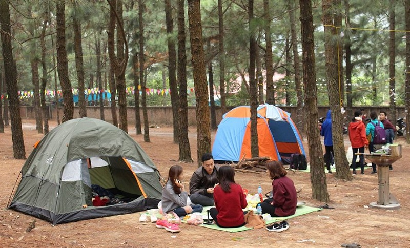 Các nhóm lựa chọn cắm trại trong rừng thông tại Thiên Phú Lâm