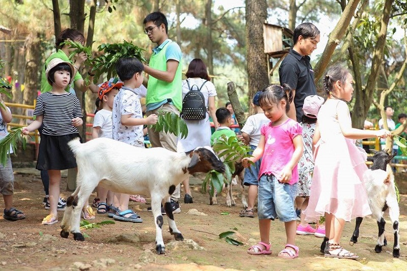 Các bé có thể tự mình cho các con vật ăn