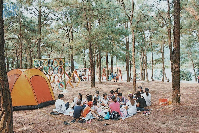 Nhiều gia đình lựa chọn cắm trại ở rừng thông