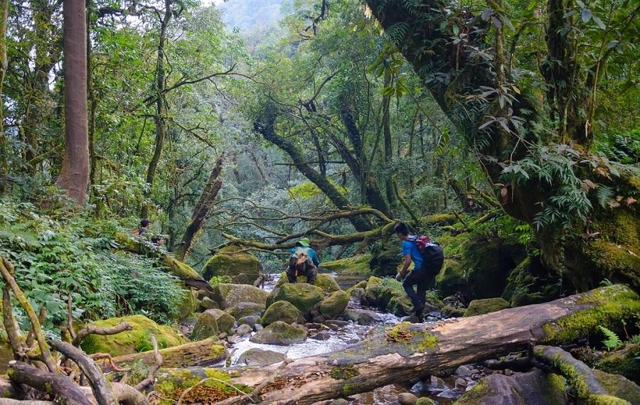 2 người đang băng qua đoạn đường gaapk gềnh với suối và các dải gỗ mục trong cánh rừng nguyên sinh