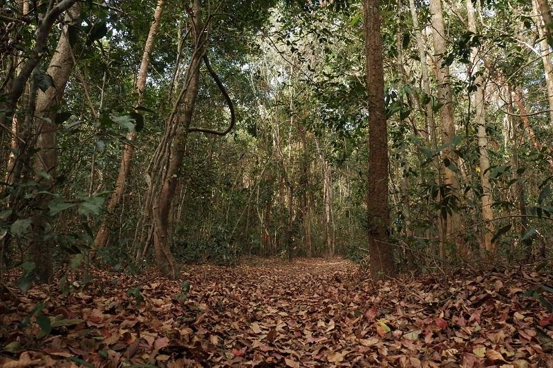 Khu rừng nguyên sinh Bình Châu