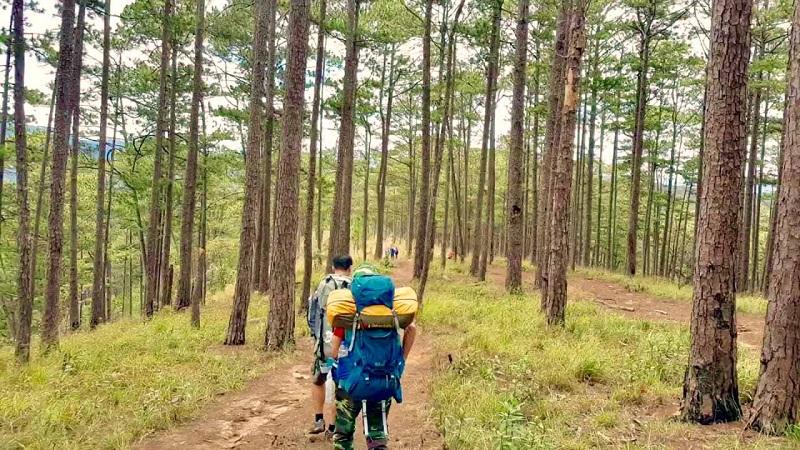 rừng mòn thông để lên đỉnh Langbiang