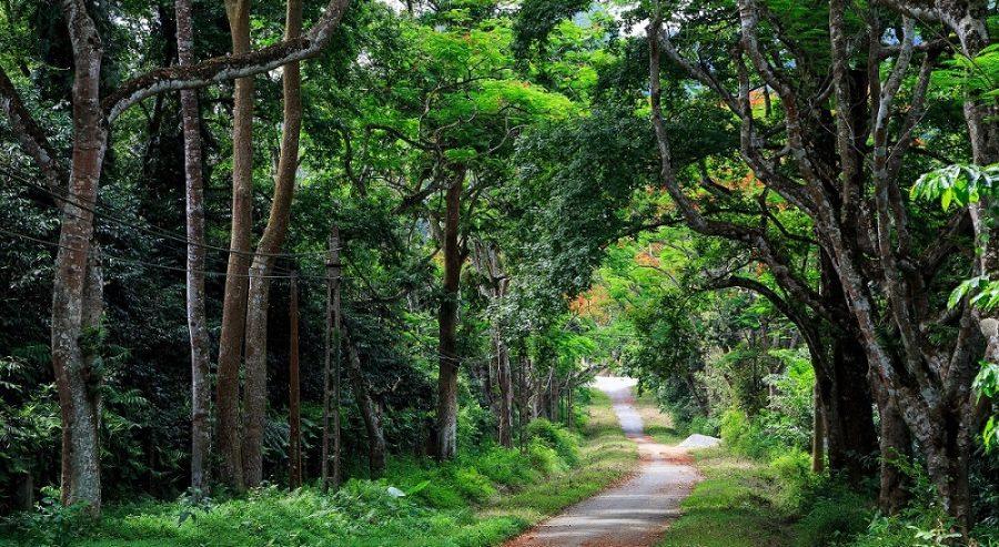 đường rừng mòn cúc phương
