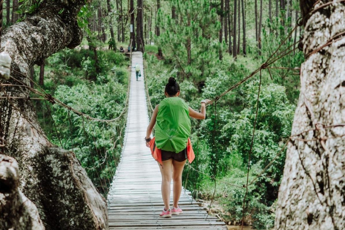 đường rừng đi trekking