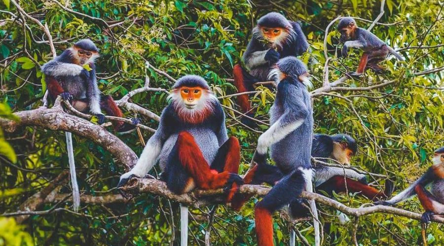 loài khỉ Châu Á trong rừng Cúc Phương