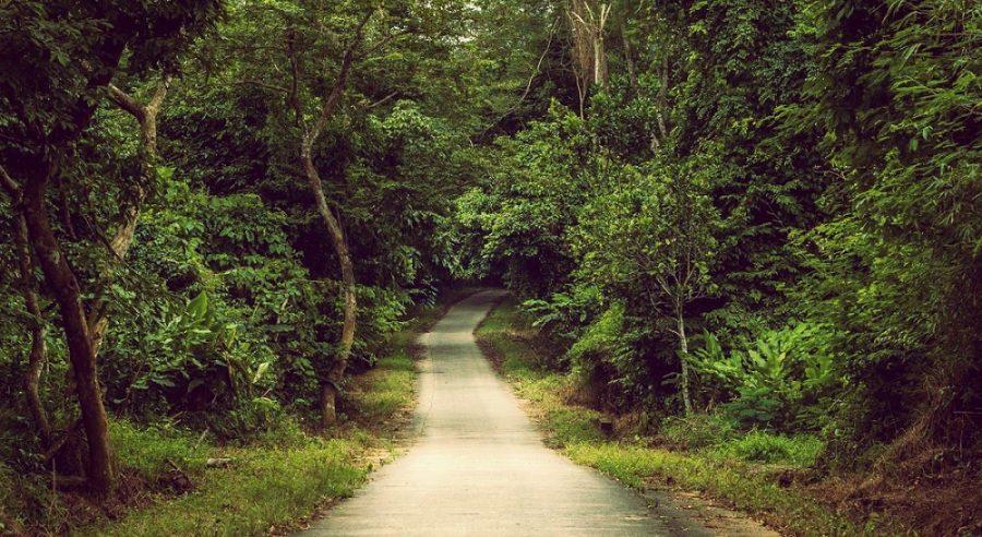 Lối vào rừng cúc phương