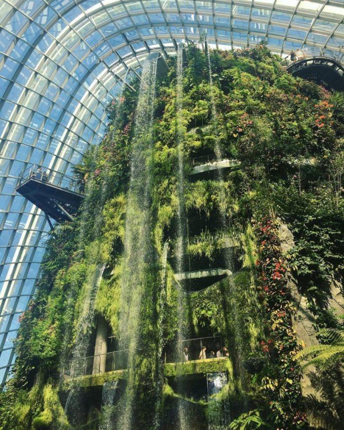 Cloud Forest với cấu trúc phức hợp của nhiều loài thực vật