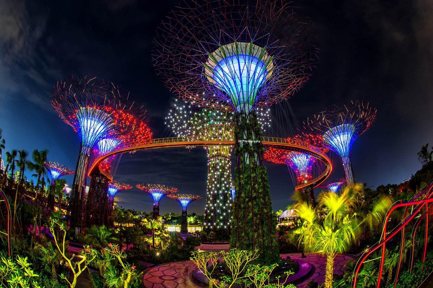 Khu vườn cây khổng lồ ngập tràn màu sắc