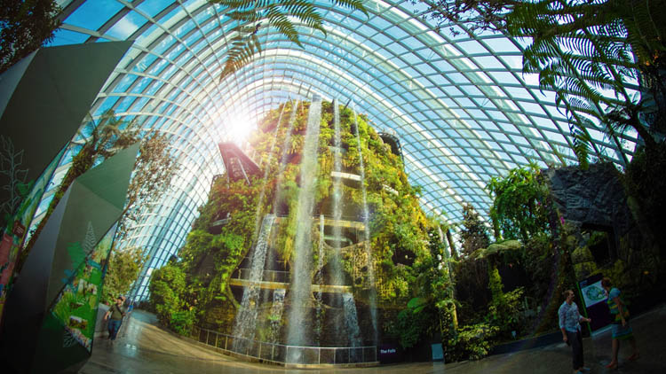 Không gian khu nhà kính nơi có nhiều loài cây lớn