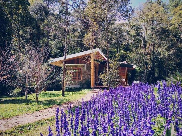 La an Resort Dalat bên cạnh cánh đồng hoa lavender thơ mộng