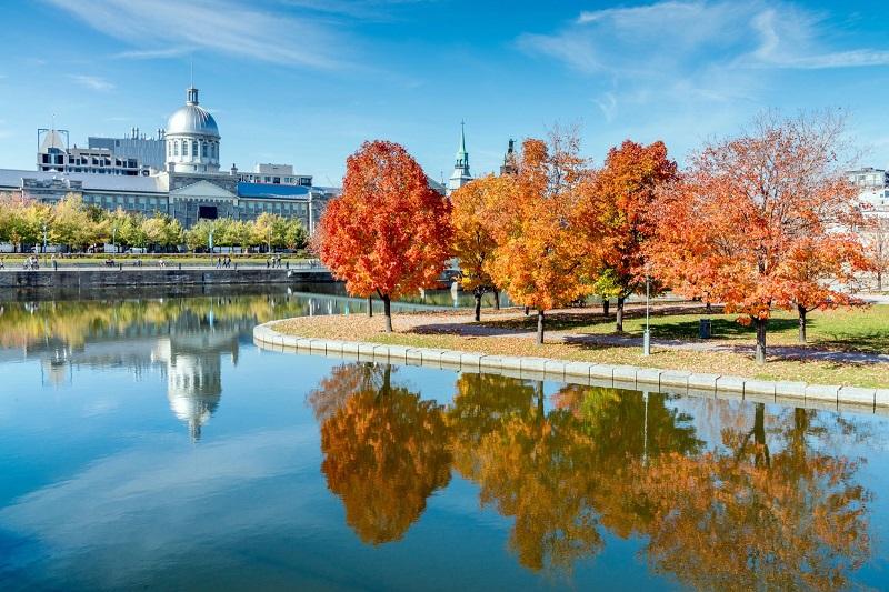 Khu phố cổ Montreal với những tán cây đỏ cạnh hồ nước