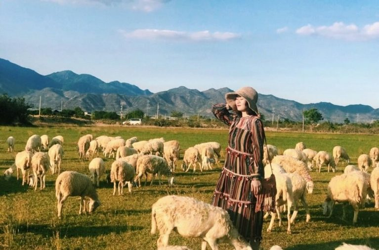 Đồng cừu An Hòa là một trong các điểm du lịch ở Ninh Thuận nổi tiếng, nơi du khách được hòa mình vào khung cảnh thanh bình hay chơi đùa cùng những chú cừu hiền lành.