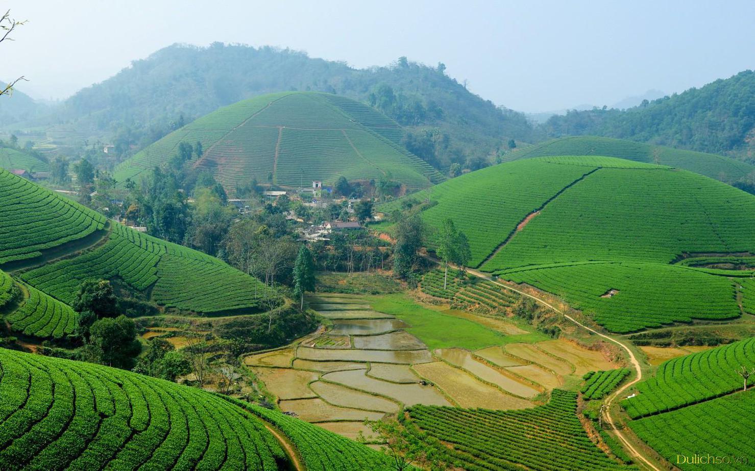 Những đồi chè xanh tươi bao quanh thửa ruộng bậc thang dưới thung lũng