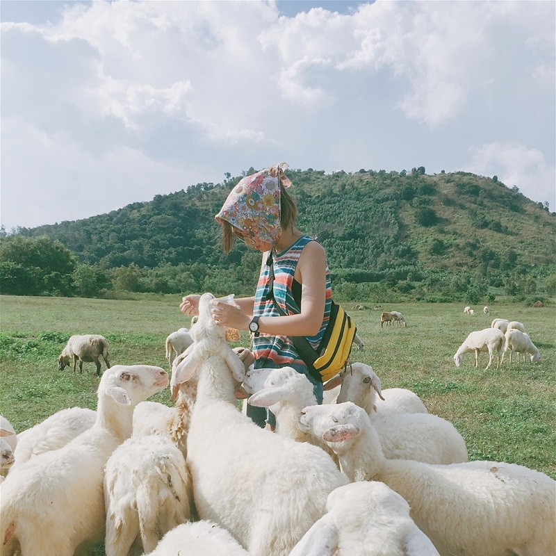 Cô gái chơi đùa với lũ cừu giữa khung cảnh núi rừng thiên nhiên