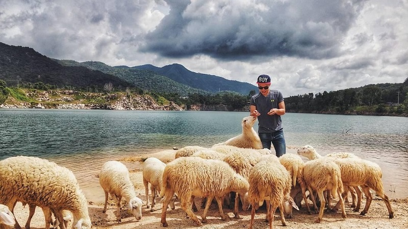 Vui chơi với đàn cừu ở đồng cừu Suối Nghệ Vũng Tàu