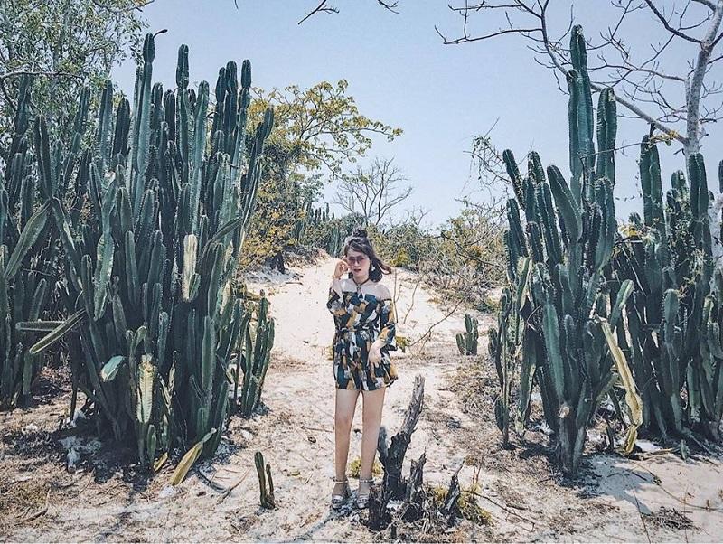 Cô gái chụp hình giữa vườn xương rồng độc đáo ở Hồ Tràm
