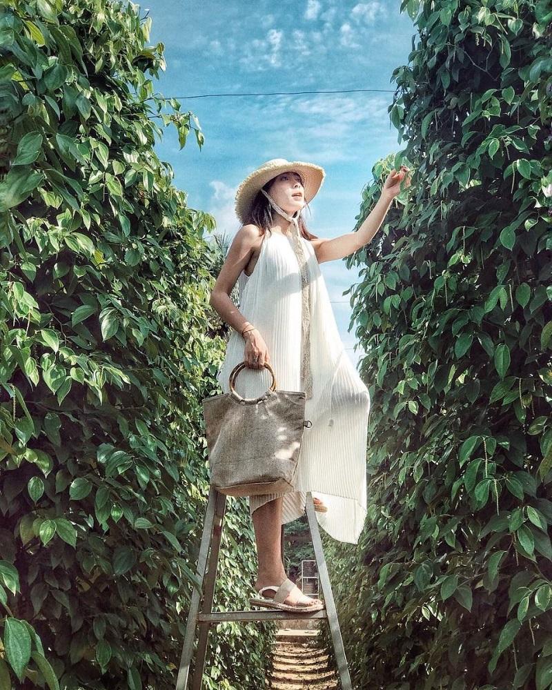 đừng quên ghé qua vườn tiêu Phú Quốc nhé!